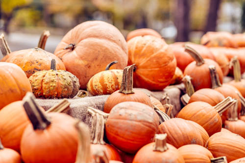 Join us for our Family Fall Festival